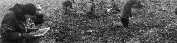 Hand searching for earthworms